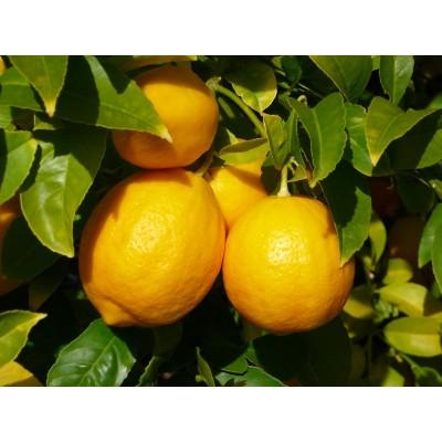Zayat Aroma - Huile Essentielle - Citron Jaune - 11mL