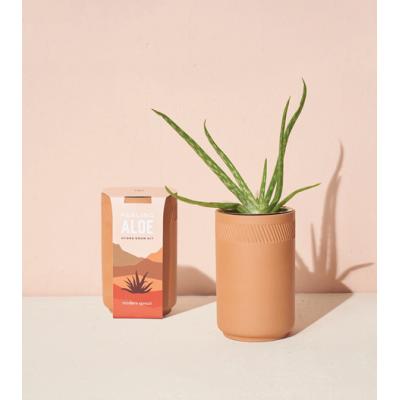 Modern Sprout - Kit de plantation en terre cuite - Aloès