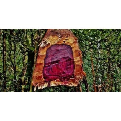 Zayat Aroma - Huile Essentielle - Bois de rose - 11mL