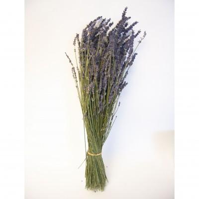 Mimosa - Bouquet de lavande séché - Mauve