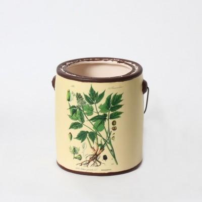 Mimosa - pot - plante verte